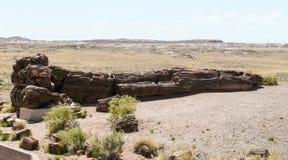 Stam av det förstenade trädet i förstenade Forest National Park Fotografering för Bildbyråer