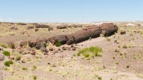 Stam av det förstenade trädet i förstenade Forest National Park Royaltyfria Foton