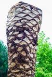 Stam av en klippt palmträd Royaltyfri Foto