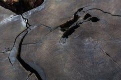 Stam av 2000 gamla sequoia för år Fotografering för Bildbyråer