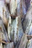 Stam av palms2 Arkivbild