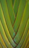 Stam av palmträdet Fotografering för Bildbyråer