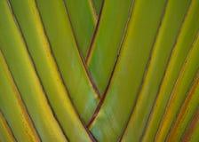 Stam av palmträdet Arkivbild