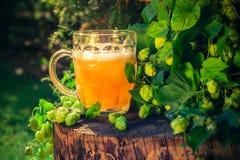 Stam för guld- öl för halv liter trä Royaltyfri Bild