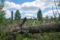 Stam för träd för sommarsäsong liggande inom ett storm dolt område Arkivbilder