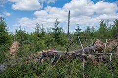 Stam för träd för sommarsäsong liggande inom ett storm dolt område Arkivfoton