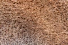 Stam för detaljväxtsilkespapper av en gömma i handflatan Arkivbild
