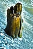 Stam i havet Royaltyfria Foton