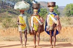 stam- kvinnor för bonda Royaltyfri Bild