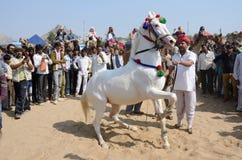 Stam- nomadmandeltagande på hästdanskonkurrens, Pushkar, Indien Royaltyfria Bilder