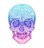Stam- stil för mänsklig skalle Tatueringblackwork Tecknad illustration för vektor hand Boho Arkivbild