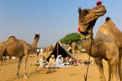 Stam- turbanmän på den Pushkar kamelmässan, Rajasthan, Indien Royaltyfria Foton