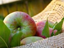 Stam van Apple stock foto's