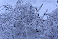Stam van de vorst snow-covered struik op de ijzige grond stock foto