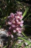 Stam van lilac orchideebloemen royalty-vrije stock foto