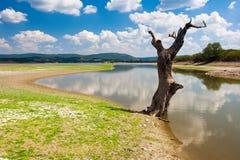 Stam vid sjön Arkivbild