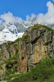 Stambecco della montagna nelle alpi italiane Fotografia Stock Libera da Diritti