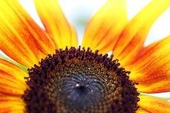stamen цветка Стоковые Фото