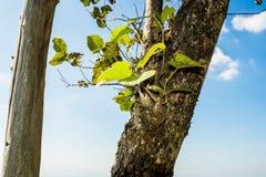Stamm-Baum mit einer Niederlassung und einem Blatt Stockfoto