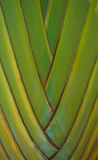 Stamm der Palme Stockbild