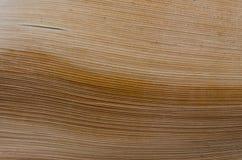 Stamm der Palme Pastellbeschaffenheit Stockfotografie