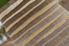 Stamm der Palme Pastellbeschaffenheit Stockfoto
