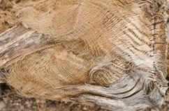 Stamm der Palme Pastellbeschaffenheit Lizenzfreie Stockbilder