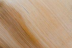 Stamm der Palme Pastellbeschaffenheit Stockbild