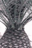 Stamm der Palme tropische Beschaffenheit Lizenzfreie Stockfotos