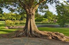 Stamm des alten Baums im botanischen Garten Lizenzfreies Stockbild