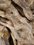 Stamm des Baums Stockfotos