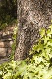 Stamm des Baums Lizenzfreie Stockfotos