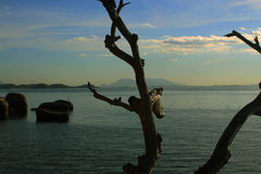 Stamm des Baums, brasilianische Insel stockbild