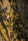 Stamm des Baums im Moos stockbilder