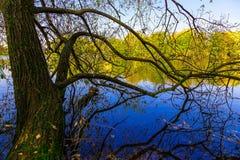 Stamm des Baums mit Niederlassungen über See-Oberfläche Stockfoto