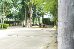 Stamm des Baums mit unscharfem Garten lizenzfreies stockbild