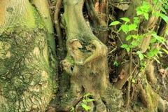 Stamm des Baums sieht wie ein Herz aus stockfoto