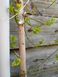 Stamm des Baums und des alten Brettes lizenzfreies stockbild