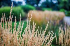 Stamm des grünen Grases, der draußen wächst stockfoto