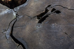 Stamm des 2000-Jähriger-Mammutbaums Stockbild