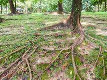 Stamm eines alten Baums lizenzfreies stockfoto