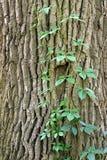 Stamm eines Baums Lizenzfreie Stockfotos