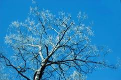 Stamm eines Baums mit bloßen Niederlassungen und Weiß bellt gegen die SK Stockbilder
