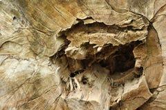 Stamm eines Baums mit einem geschädigten Herzen Lizenzfreies Stockbild