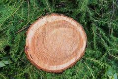 Stamm eines Lärchenbaums mit einem Muster von Kreisen auf einem Schnitt gegen den Hintergrund Stockbilder