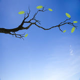 Stamm mit grünem Blatt Lizenzfreies Stockbild