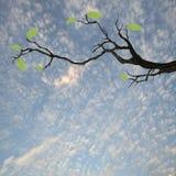 Stamm mit grünem Blatt Stockfoto