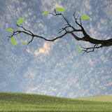 Stamm mit grünem Blatt Stockbilder