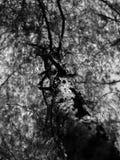 Stamm und Niederlassungen des Baums Stockfotografie