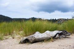 Stamm von altem getrocknet herauf Baum auf Sand im Gras Stockbilder